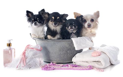 Toilettage pour chiens beaut royale trois rivi res for Tarif pour tondre pelouse